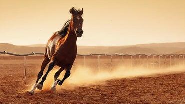 Do Horses Sit Down?