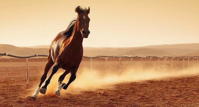horses-sit-down