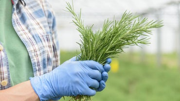 What Are Some Horticulture Careers?