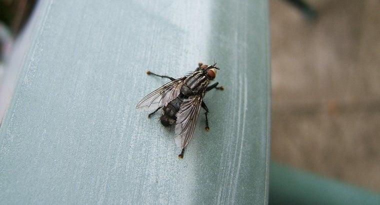 house-flies-eat
