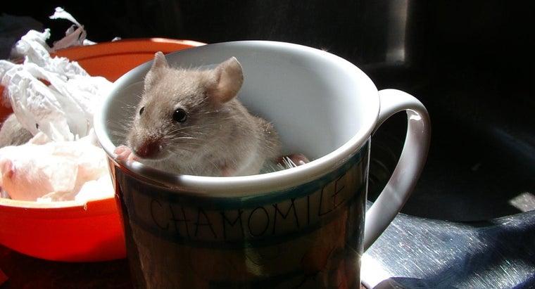 house-mice-hibernate