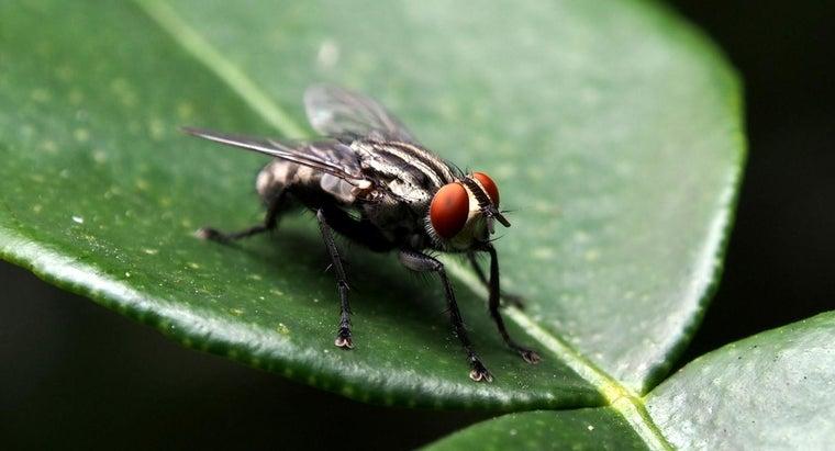 houseflies-during-winter