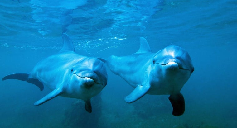 bottlenose-dolphins-reproduce