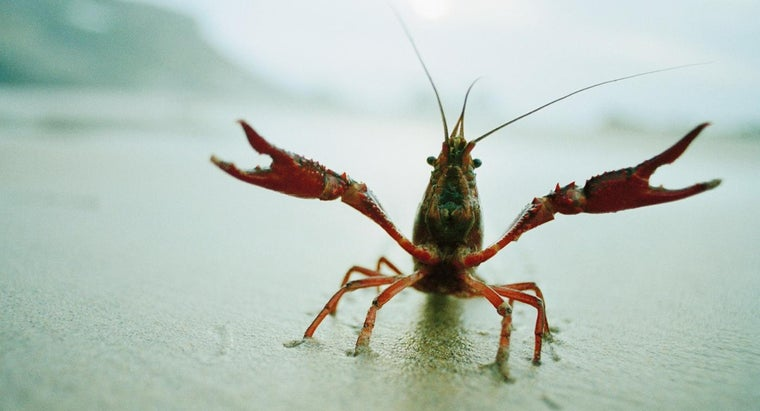 crayfish-protect-themselves