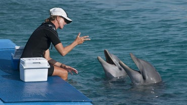 How Do Dolphins Talk?