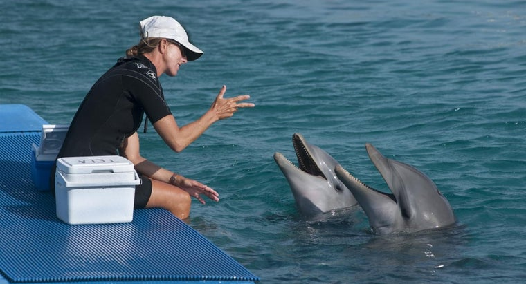 dolphins-talk