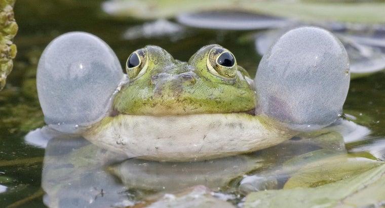 frogs-talk