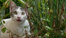 How Can You Keep Cats Out of a Garden?