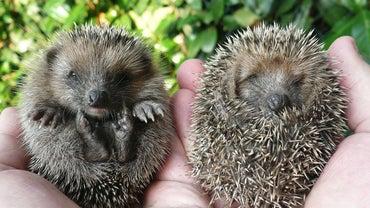 How Do I Get Rid of Hedgehogs?
