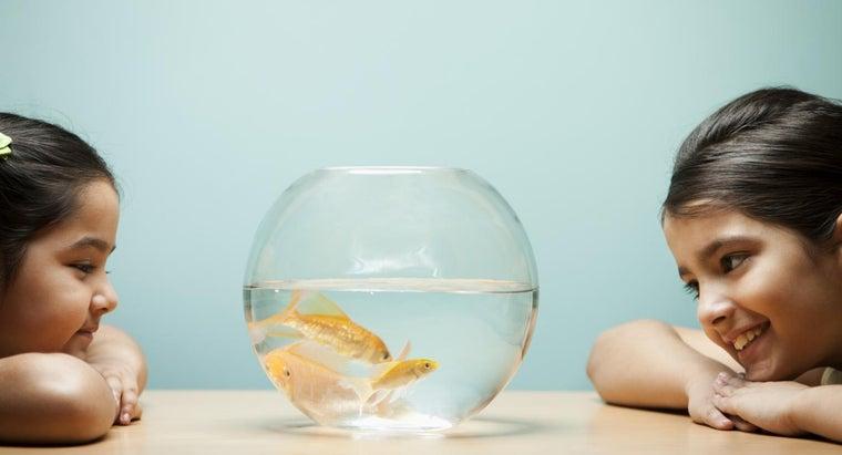 goldfish-male-female