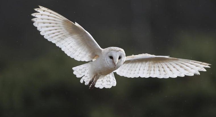 owls-communicate
