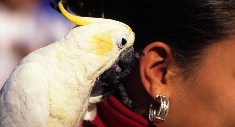 parrots-talk