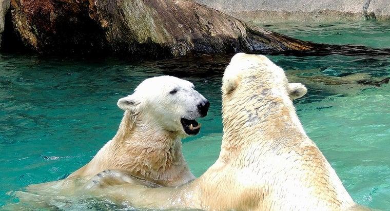 polar-bears-reproduce