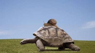 How Do Turtles Move?