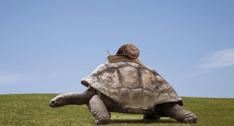 turtles-move