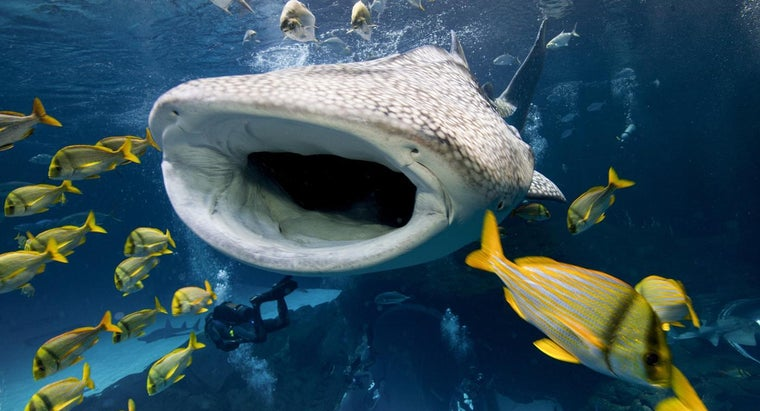 whale-sharks-protect-themselves