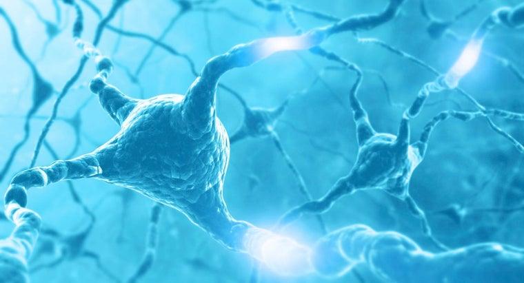 nerve-impulse-travel-along-neuron