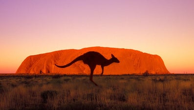 How Fast Can a Kangaroo Run?