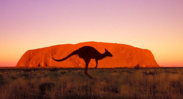fast-can-kangaroo-run