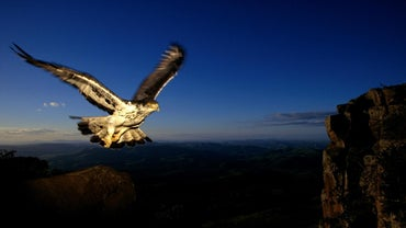 How Fast Can an Eagle Fly?