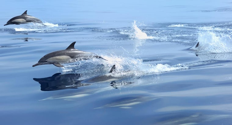 fast-can-dolphins-swim