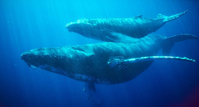 long-can-whale-hold-its-breath