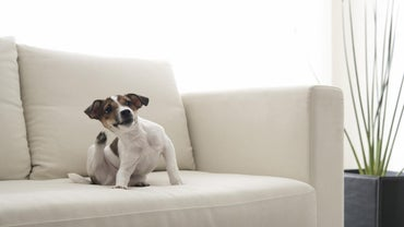 How Long Do Dog Fleas Live in the Home?