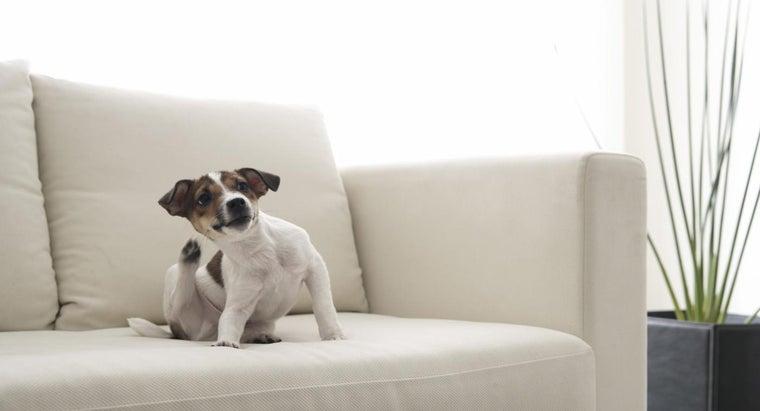 long-dog-fleas-live-home