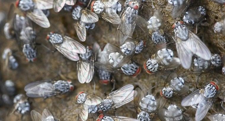long-flies-live