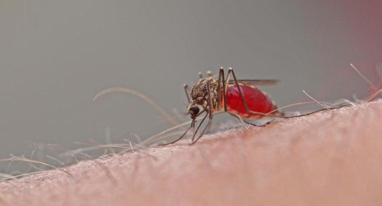 long-mosquito-bites-last