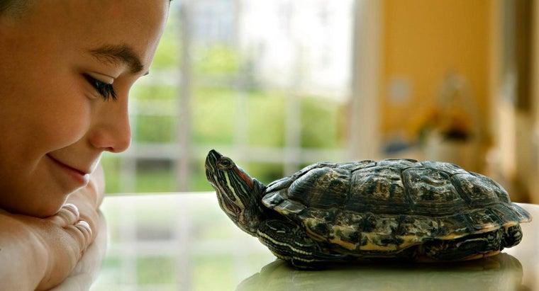 long-pet-turtles-live