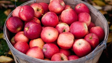 How Many Apples Does It Take to Create 1 Gallon of Apple Cider?