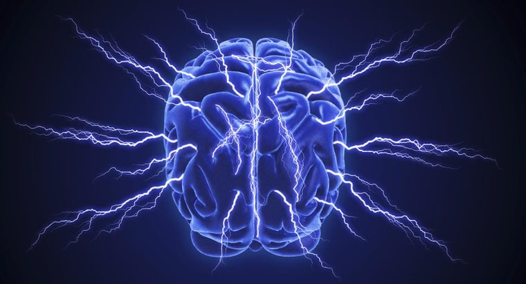 many-pairs-cranial-nerves