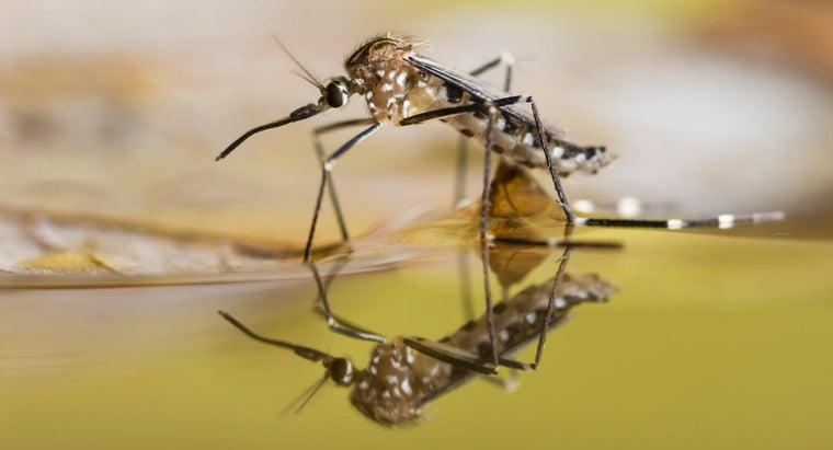 many-teeth-mosquitoes