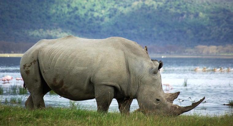 many-white-rhinos-left-world