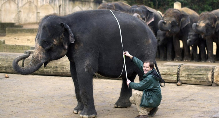 much-elephants-weigh-tons