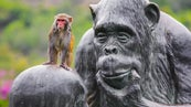 What Do Monkeys Do for Fun? | Reference com