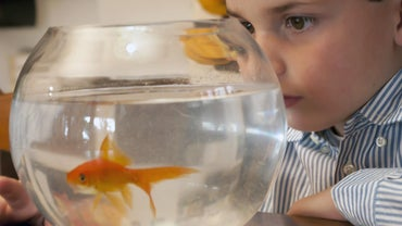 How Often Should I Clean My Goldfish Bowl?