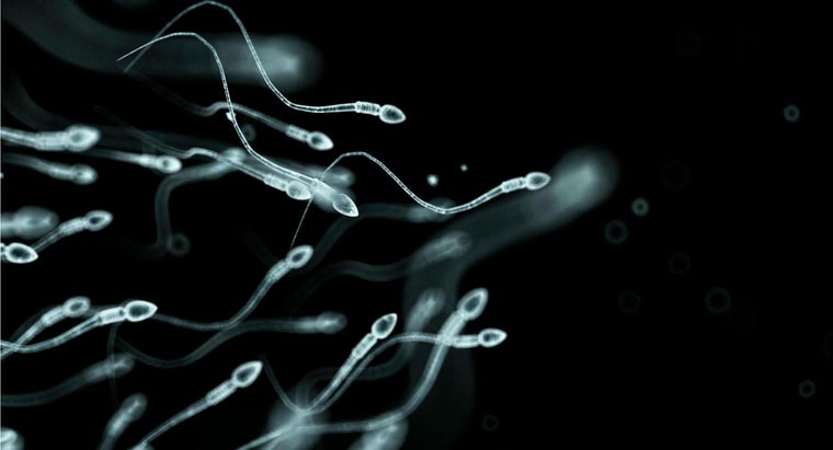 men-produce-sperm