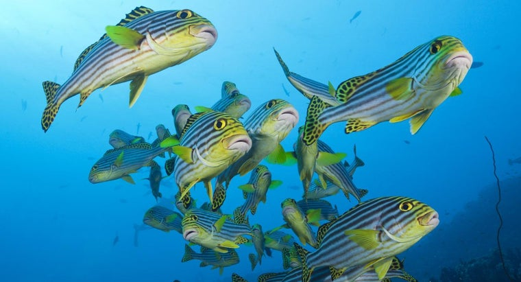 breed-tropical-fish