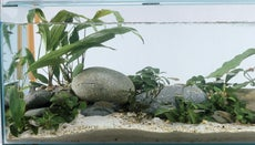 How Do You Clean Aquarium Rocks?