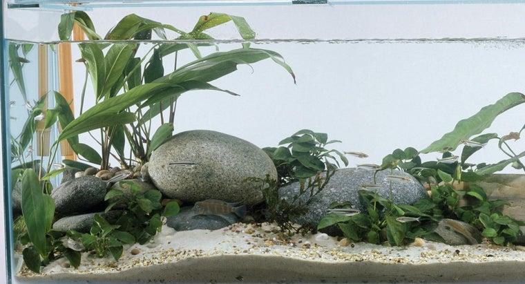 clean-aquarium-rocks