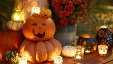 How Can You Keep Pumpkins From Rotting?