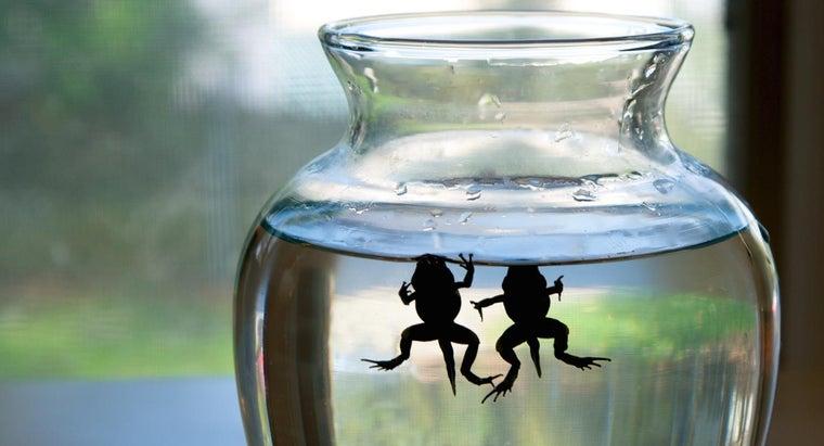 keep-tadpoles-alive