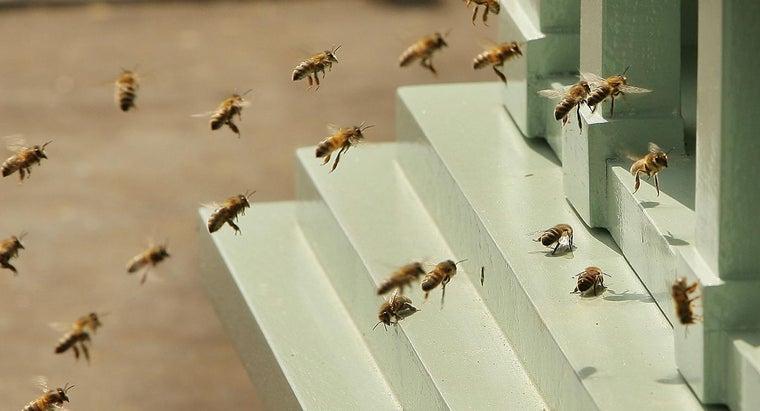 kill-bumblebees