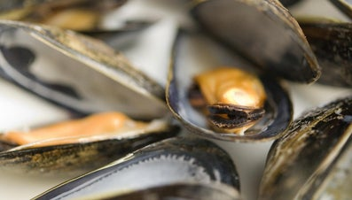 How to Tell If Mussels Are Bad?