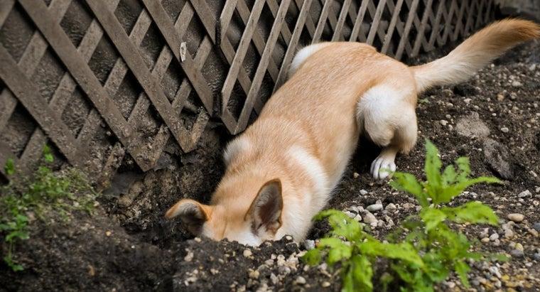husky-lab-mix-dog