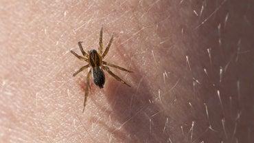 How Do You Identify Spider Bites?