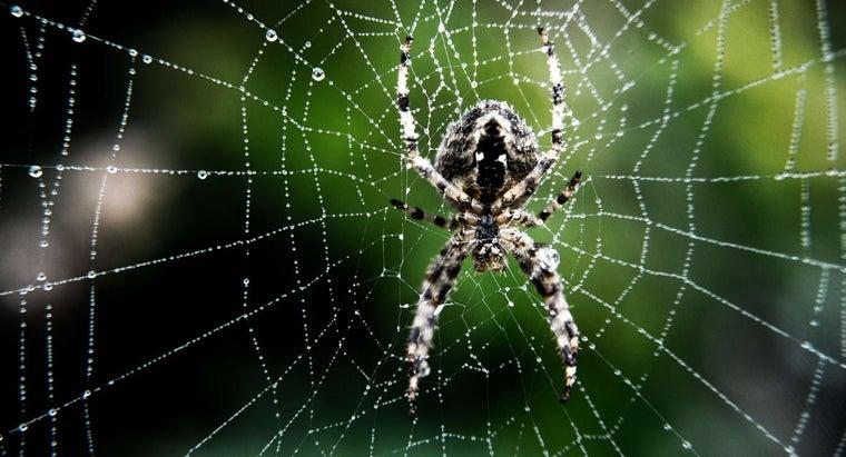 identify-spider