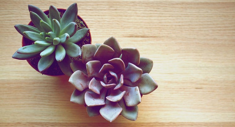 identifying-characteristics-succulent-plants